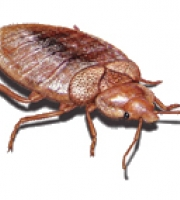 bed-bug-imagery