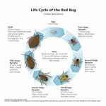 How Long Bed Bugs Live