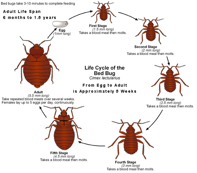 Bed Bugs Northwest Territories