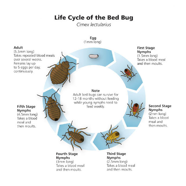 Bed bug wall or baseboard bed bug registry database for Average life of a mattress
