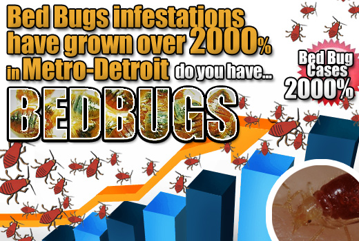 Bed Bugs in Metro Detroit and Michigan on a Huge Rise